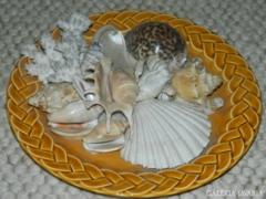 Tengeri herkentyűk olasz Pagnossin Treviso fali tányéron