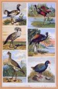 S. Czeiger : Egzotikus madarak