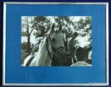 0C216 Eredeti lovas fotográfia Polner szignóval