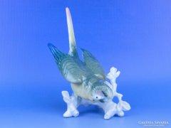 0D139 Antik ENS porcelán papagáj