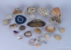 0K917 Régi kőzet kagyló gyűjtemény