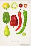 Paprika II., színes nyomat 1961, növény, zöldség