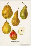 Körte II., színes nyomat 1961, növény, gyümölcs