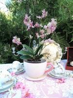 Hatalmas csésze virágkaspó