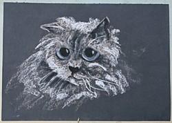 Szántó Piroska: Macskaportré (pasztell 50x35cm )