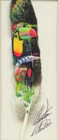0O286 Jelzett Costa Ricai madártoll festmény