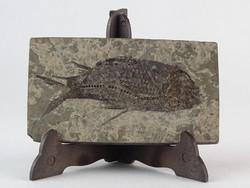 0O309 Ősi hal lenyomat hal fosszília 12 cm