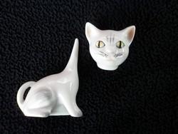 Ritka Aquincumi Zöld szemű cica