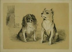 Osztrák művész : Kutyaportrék 1848