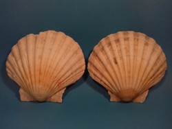 Tengeri Shell kagyló 2 db