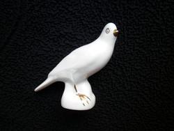 Aquincumi fehér galamb
