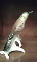 ENS madár