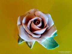 Hibátlan Ens rózsa