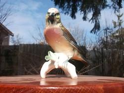 Ens szinpompás madár figura hibátlan