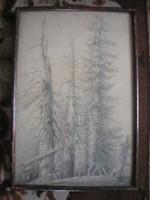 N11 Antik művészi szénrajz erdőrészlet fatáblán papíron elől üveglapos 46 X 31 cm