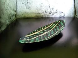 Gorka Lívia kerámia tál ovális kináló