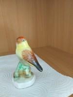 Pinty - madár- Bodrogkeresztúri