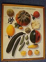 Kobakterméseket ábrázoló francia poszter keretezve