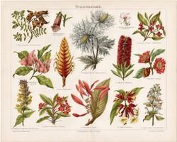 Virágok, növények, litográfia 1898, német nyelvű, eredeti, színes nyomat, növény, virág