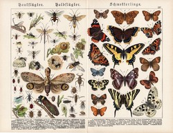 Pillangók, hártyásszárnyúak, félfedelesszárnyúak, litográfia 1890, eredeti, 32 x 41 cm, nagy méret