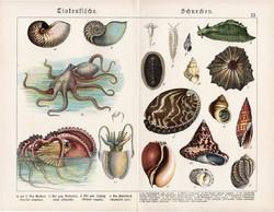 Tintahal, polip, csigáspolip, tengeri csiga, litográfia 1890, eredeti, 32 x 41 cm, nagy méret, német