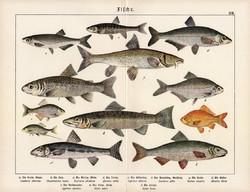 Cselle, lazac, márna, küsz, ezüstkárász, litográfia 1890, eredeti, 32 x 41 cm, nagy méret, hal