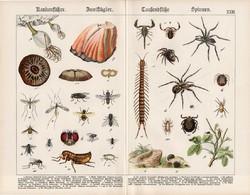 Pók, légy, darázs, bolha, skorpió, százlábú, litográfia 1890, eredeti, 32 x 41 cm, nagy méret