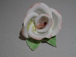 Aquincumi rózsa