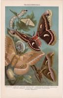 Selyemlepke, színes nyomat 1896, német nyelvű, litográfia, eredeti, hernyó, lepke, pillangó, selyem