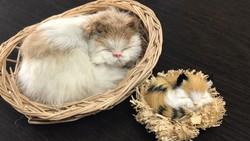 Valódi szőrme alvó kiscicák gyűjtői darabok kiskosárban