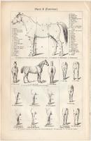 Ló I. és II., egy színű nyomat 1908, német nyelvű, anatómia, külső, testalkat, feépítés, leírás