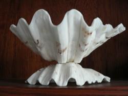 Kagyló tál asztalközép