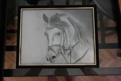 Ló Andalúz