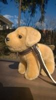 Új-Játék plüss kutya pórázzal  -ajándékba is