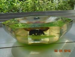 Igazi szkarabeusz bogarak üvegbe zárva Egyiptomi souvenir