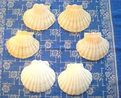 6 db tengeri (Szent Jakab) kagyló tálaláshoz vagy dekorációnak