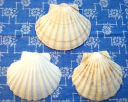 3 db tengeri (Szent Jakab) kagylóhéj tálaláshoz vagy dekorációnak