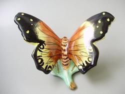 Bodrogkeresztúri lepke,pillangó gyönyörű szinekkel