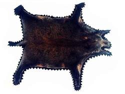 Hatalmas vaddisznóbőr szőr szőrme kandalló szőnyeg, fali dísz...