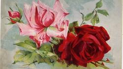 Rózsák, használt lap: 1922. aug.