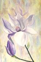Magnólia - Tulipánfa virág