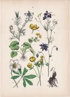 Mocsári gólyahír, szarkaláb, zergeboglár, katicavirág litográfia 1884, német, növény, virág