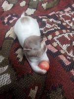 Porcelán játszó cica