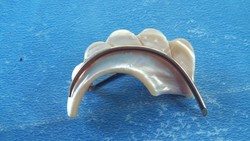 Régi gyöngyház kagyló bross kitűző