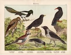 Varjú, csóka, szajkó, szarka, litográfia 1886, eredeti, 32 x 41 cm, nagy méret, madár, színes nyomat