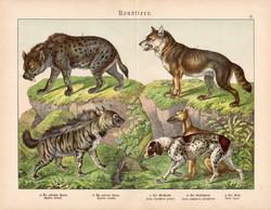 Ragadozók (5), litográfia 1886, német, eredeti, 32 x 41 cm, nagy méret, farkas, vadászkutya, hiéna