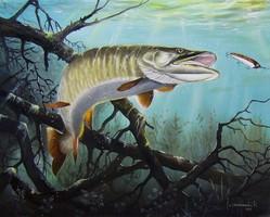 Csuka horgászat 50x40cm olaj-vászon festmény