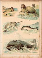 Bálna, delfin, narvál, fóka, litográfia 1880, eredeti, 24 x 34 cm, nagy méret, állat, tenger, óceán
