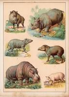 Vaddisznó, sertés, disznó, víziló, orrszarvú, litográfia 1880, eredeti, 24 x 34 cm, nagy méret