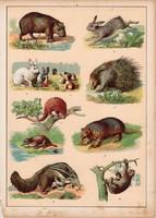 Nyúl, sündisznó, lajhár, hangyász, tatu, litográfia 1880, eredeti, 24 x 34 cm, nagy méret, állat